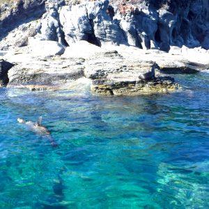Sea Liones-min